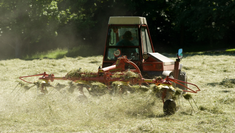 Dual Purpose Meadow Grass Seed Mix, Mixture