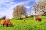 General purpose grazing mix