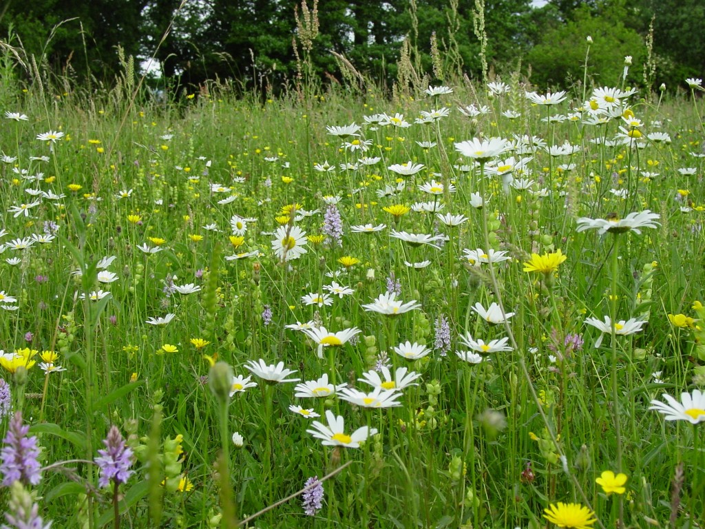 how to get rid of annual meadow grass