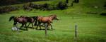 Renovator Pasture Repair