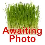 awaiting-photo-grass