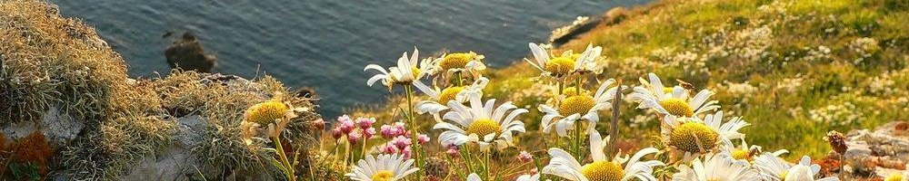 Coastal Wildflower Seed Mix, Wild Flower Seed Mixture