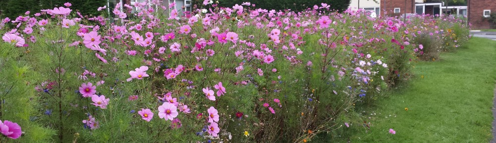 social housing and wildflowers 2a
